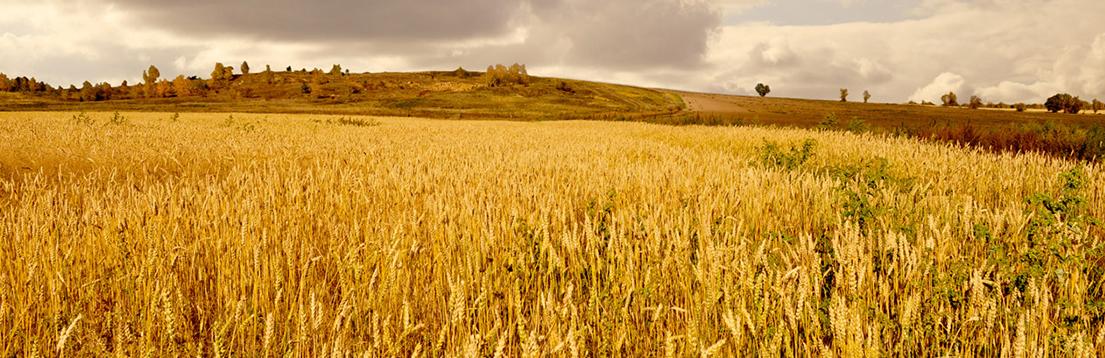 gold-fields