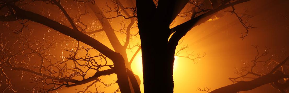 tree-sillouette